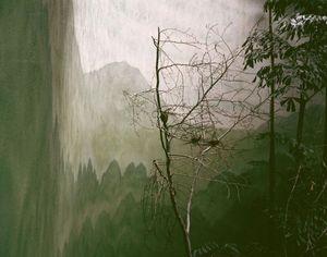 © Monika Wiechowska, Landscape #2 (Bronx Zoo, NY, USA) 2007  Courtesy of Czarna Gallery, Warsaw.