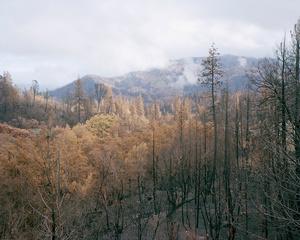 Cobb View