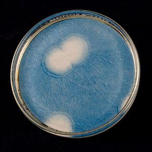 Gonorrhea One