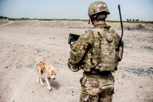 Dog Looking For Food, Kandahar