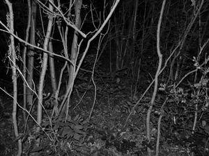 INNER FOREST I