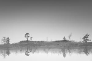 Soomaa - land of bogs V