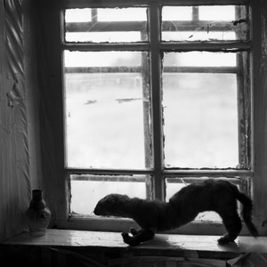 The stuffed sable. Dalniy Yar. Tomsk region. Russia. 2009.