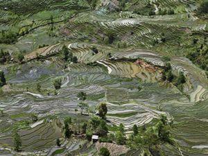 Edward Burtynsky, Rice Terraces #1, Western Yunnan Province, China, 2012 © Edward Burtynsky, courtesy Howard Greenberg Gallery, and Bryce Wolkowitz Gallery, New York / Nicholas Metivier Gallery, Toronto, Paris Photo LA