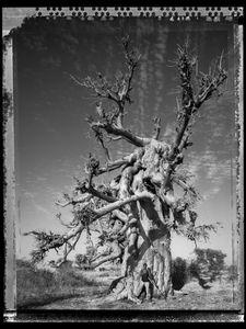 Baobab 08 Mali 2008 © Elaine Ling