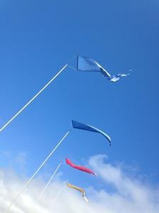 Beach Flags, Santa Cruz, California
