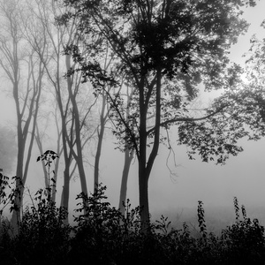 Forest Fog 5