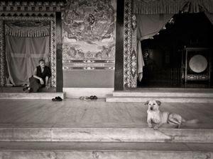 Monk and dog at Pullahari monastery