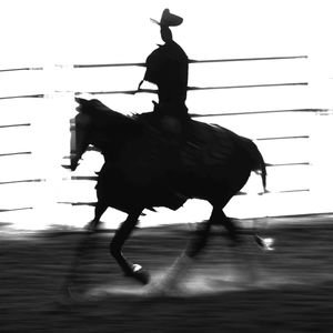 Cutting Horse Competition, Kalispell, Montana