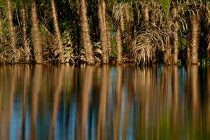 Reflections in the Amazon - © Adel Korkor