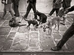 Dogs at Boudhanath, Kathmandu