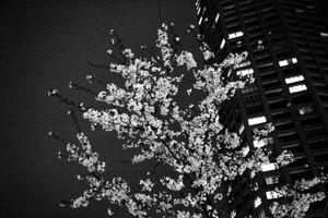 Tokyo blur #16