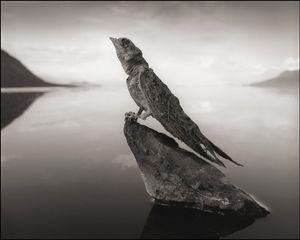 Petrified Swallow © Nick Brandt. Courtesy of Edwynn Houk Gallery, New York