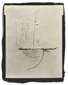 Botanical Specimen with Salt (Wildflower No. 3) © Claire A. Warden