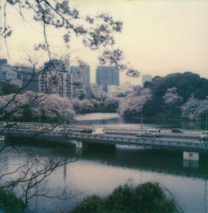 Tokyo Cherry Blossoms 5