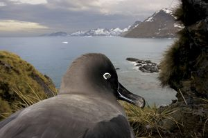 1st prize Nature Stories. © Paul Nicklen, Canada, National Geographic. South Georgia, Antartica