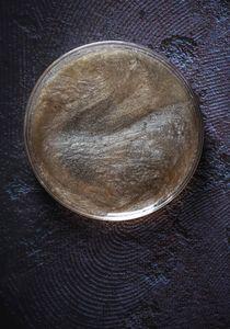 Petri Nebula 37.1