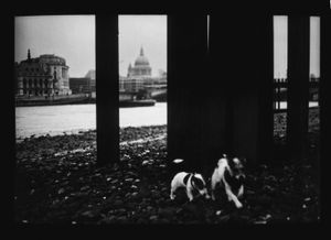 Untitled (Dogs St.Paul's), 2013