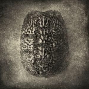 tortoise© Gary