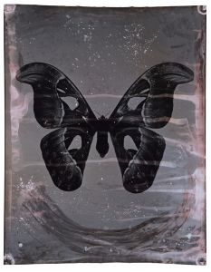 Attacus Atlas 163 x 127 cm 2009 © Jeff Cowen