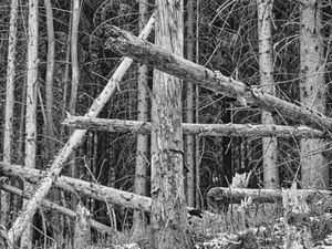 wounded woods 05