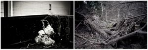radici _ roots
