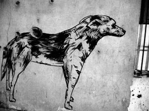 Dog bearing a heavy hole in his back