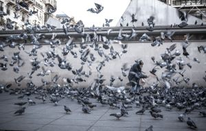 The man & his pigeons IV
