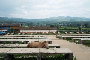 The Horse, Shaxi, Yunnan, China.