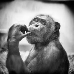 Epulu Thinking