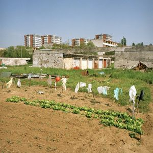 Allotments on the edge of Borovo Naselje. © Colin Dutton