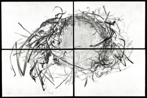 "Nest VIII, 2012                                         24""h x 36""w x 1.5""d                                         archival pigment prints & encaustic on panels                                                    © Christa Bowden"