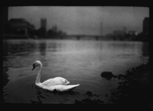 Untitled (Swan Thames), 2013