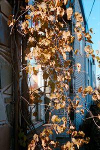 Birnam Street, Montreal, 2010