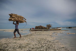 "A local worker carries ""terau"", a pack of dry coconut palm leaves that are used to build roofs of the houses in Tarawa, Kiribati"