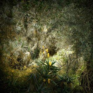 Jungles 10 © Olivia Lavergne