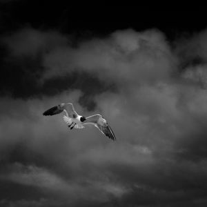 Texas City Dike - One Gull