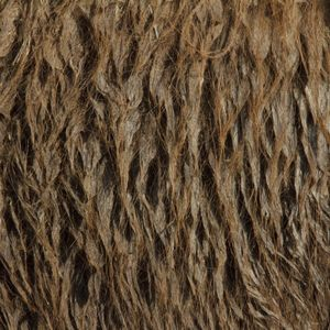 Bactrian camel © Yusuke Sakai