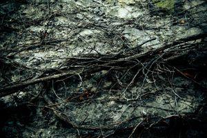 Forest © Davide Weber