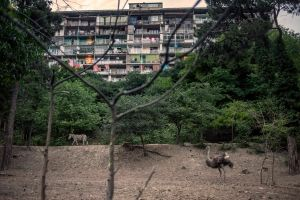 Tbilisi, Georgia. An ostrich and a zebra walk in the grounds of Tbilisi Zoo, overlooked by a Soviet era apartment block© Petrut Calinescu