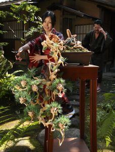 Ai-chan BONSAI (pine) in the garden, 2008 © Makoto Aida, from Heavy Light: Recent Photography and Video From Japan