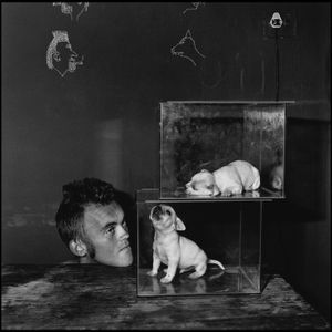 Puppies in fishtanks, 2000 © Roger Ballen