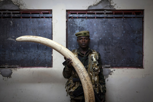The Ivory Stockpile