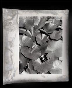 Lotus-Eaters 4,127 x 127 cm, 2005 © Jeff Cowen