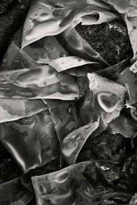 Seaweed 261, Seawall, Maine © Alan Henriksen