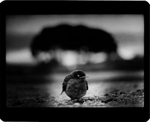 """Untitled"" (Bird and Trees), 2006  © Giacomo Brunelli"