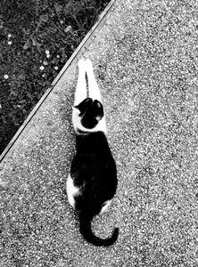 Stray Cat 10