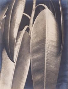 Aenne Biermann (1898-1933). Gummibaum, vers 1927. © Museum Folkwang Essen