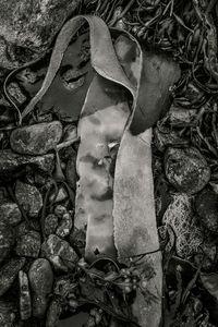 Seaweed 552, Seawall, Maine © Alan Henriksen