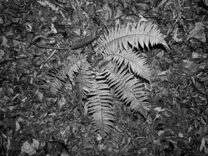 INNER FOREST XI
